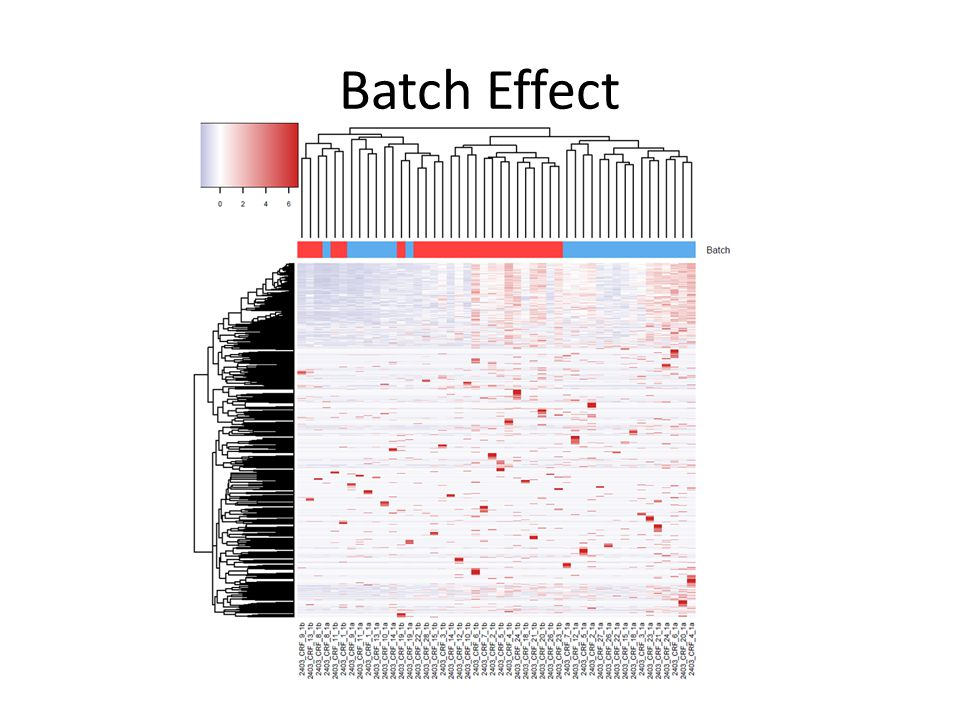Batch Effect