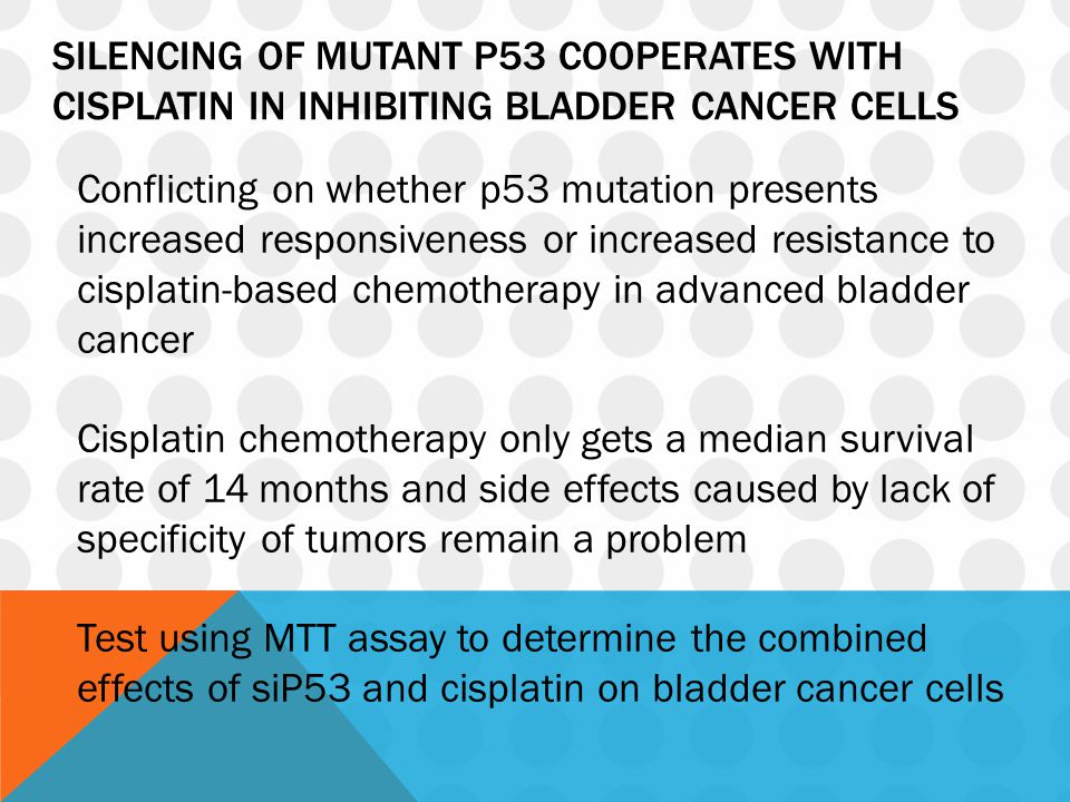 SILENCING OF MUTANT P53 COOPERATES WITH CISPLATIN IN INHIBITING BLADDER CANCER CELLS Conflicting on whether p53 mutation presents increased responsiveness or increased resistance to cisplatin-based chemotherapy in advanced bladder cancer Cisplatin chemotherapy only gets a median survival rate of 14 months and side effects caused by lack of specificity of tumors remain a problem Test using MTT assay to determine the combined effects of siP53 and cisplatin on bladder cancer cells