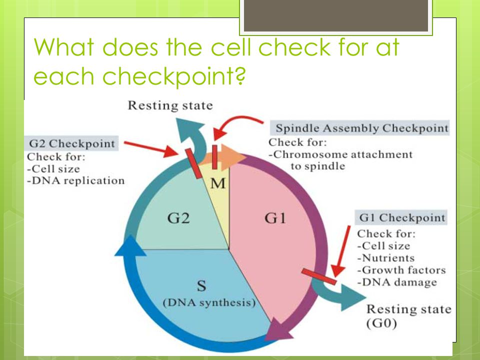 What does the cell check for at each checkpoint