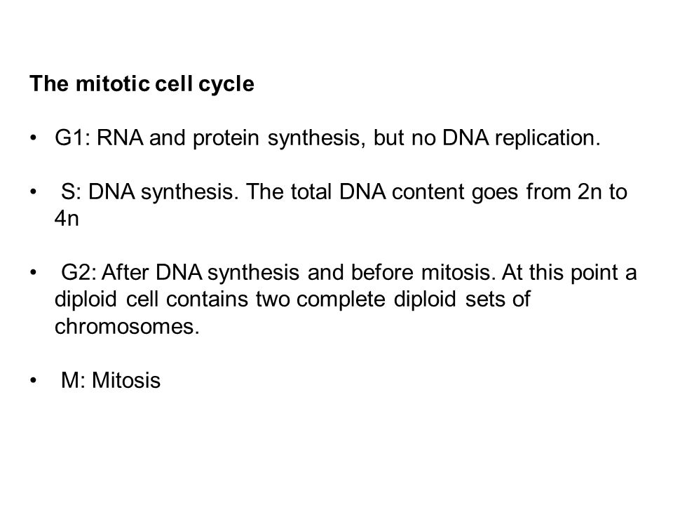 G1: RNA and protein synthesis, but no DNA replication. S: DNA synthesis. The total DNA content goes from 2n to 4n G2: After DNA synthesis and before m