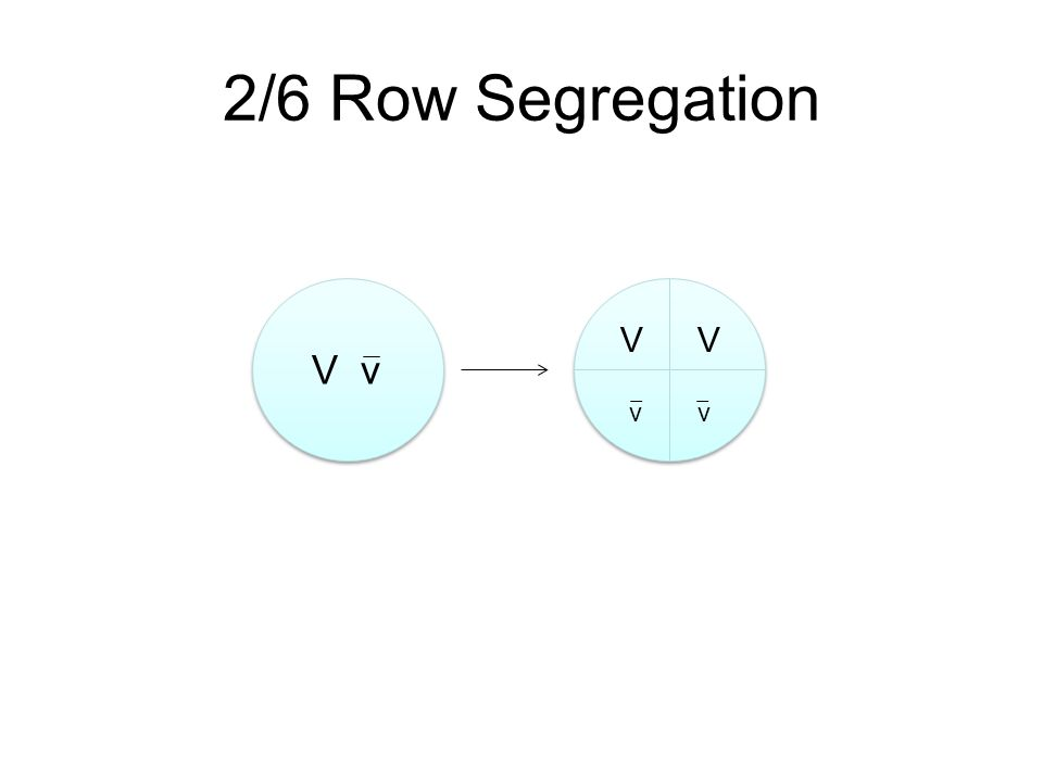 V v VV vv 2/6 Row Segregation