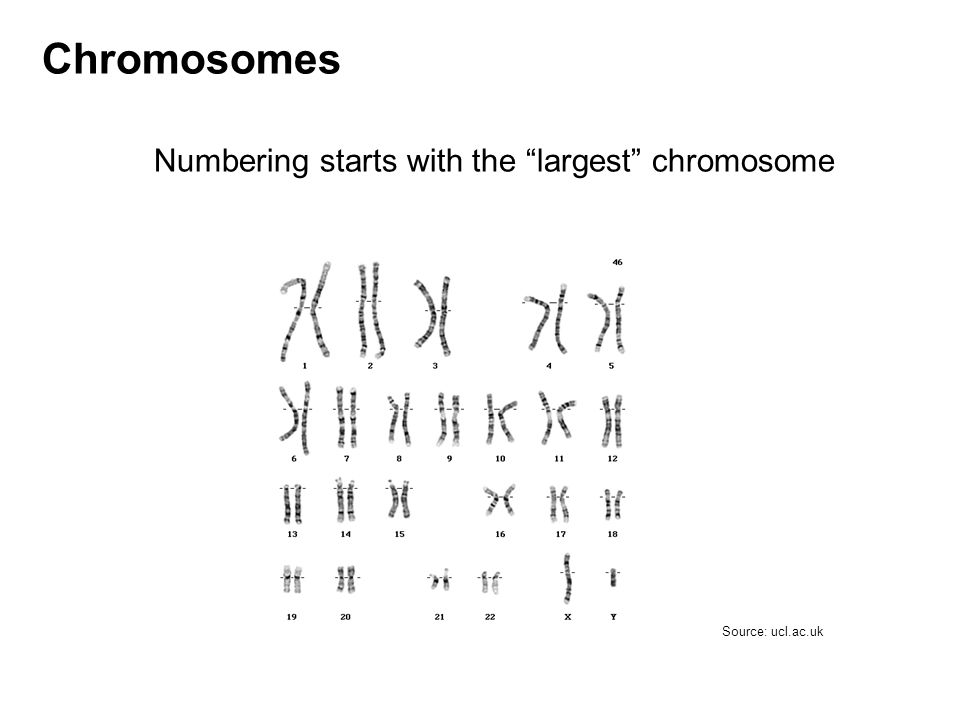 Numbering starts with the largest chromosome Chromosomes Source: ucl.ac.uk