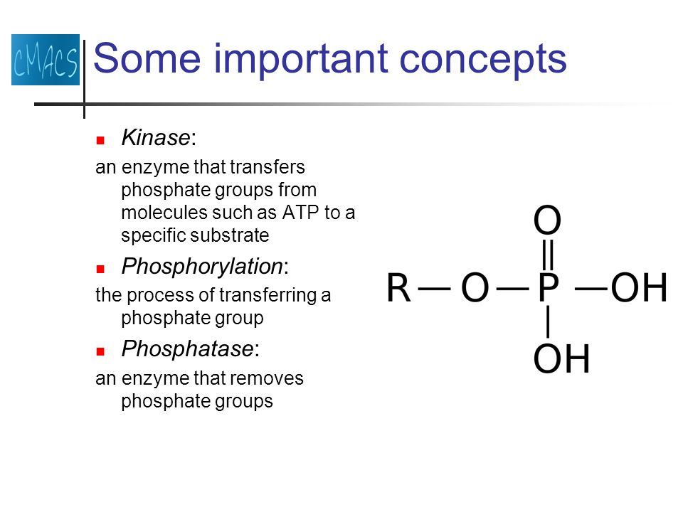 Some important concepts Kinase: an enzyme that transfers phosphate groups from molecules such as ATP to a specific substrate Phosphorylation: the process of transferring a phosphate group Phosphatase: an enzyme that removes phosphate groups