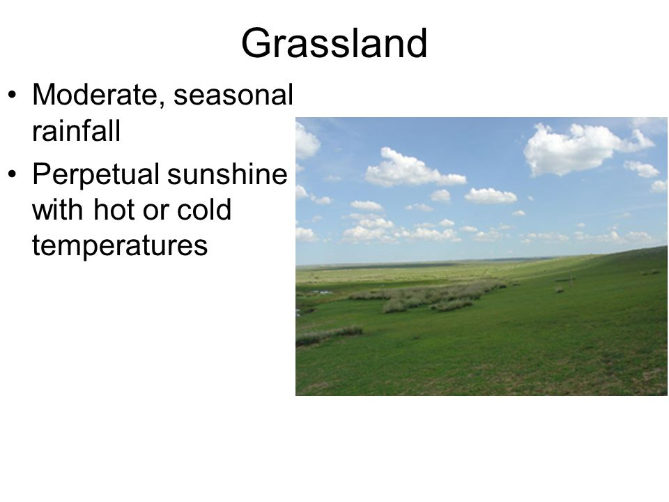 Grassland Moderate, seasonal rainfall Perpetual sunshine with hot or cold temperatures