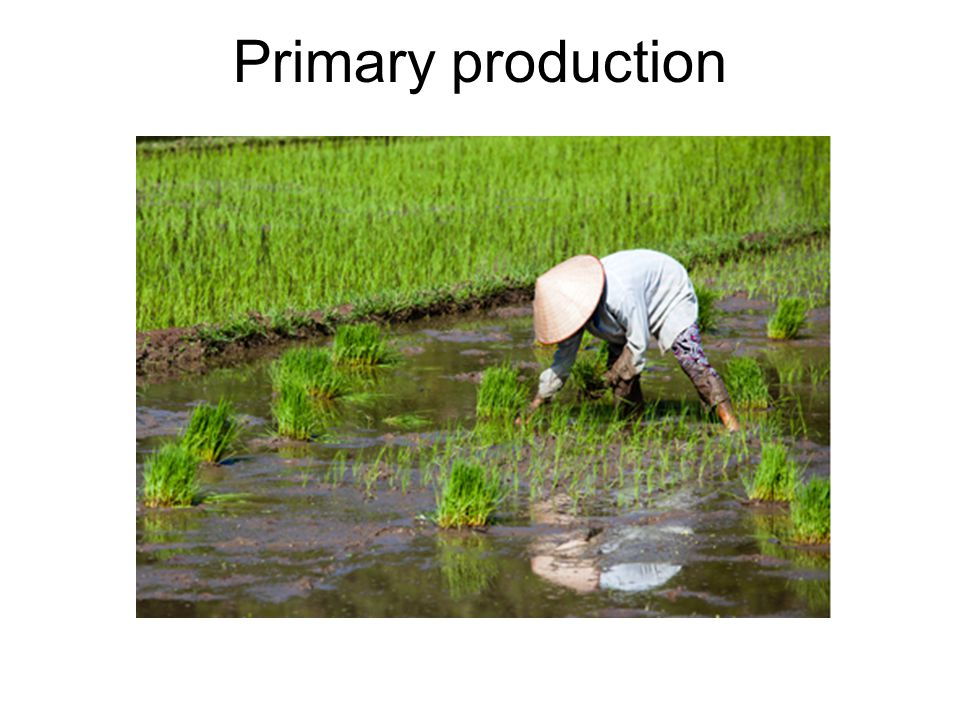 Primary production