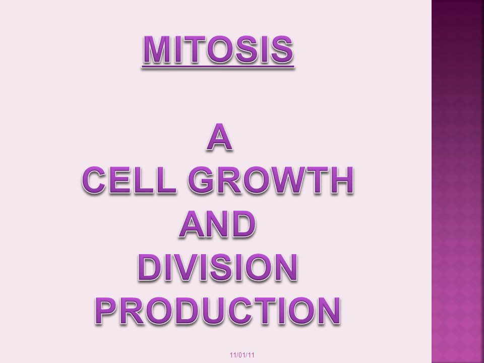 11/01/11 Mitosis Creates two daughter cells that are identical to each other AND identical to the parent cell Creates diploid cells (two sets of chromosomes in each daughter cell) Allows organisms to grow Allows organisms to replace damaged/worn out cells P-M-A-T-C