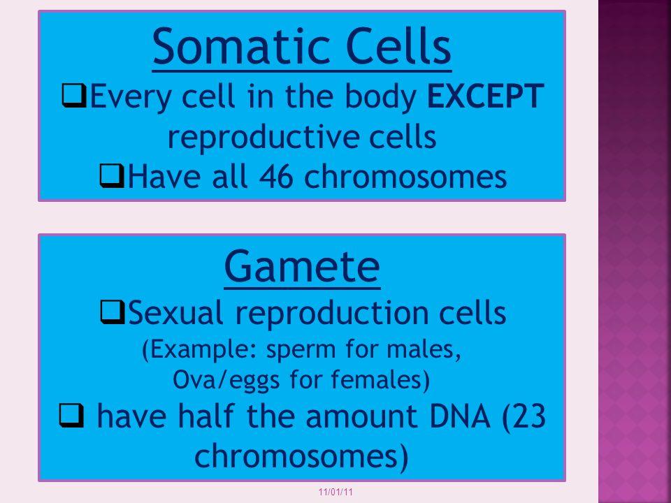  Somatic 11/01/11 OR  Gametes