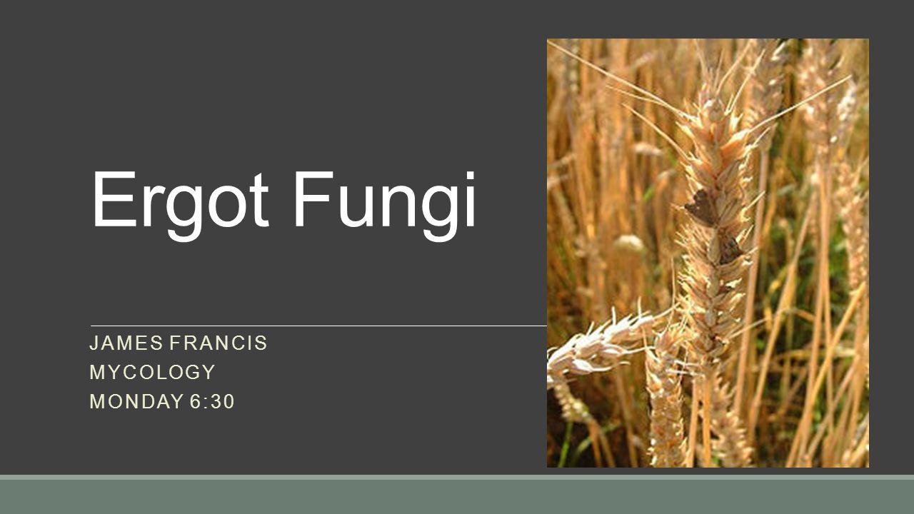 Ergot Fungi JAMES FRANCIS MYCOLOGY MONDAY 6:30