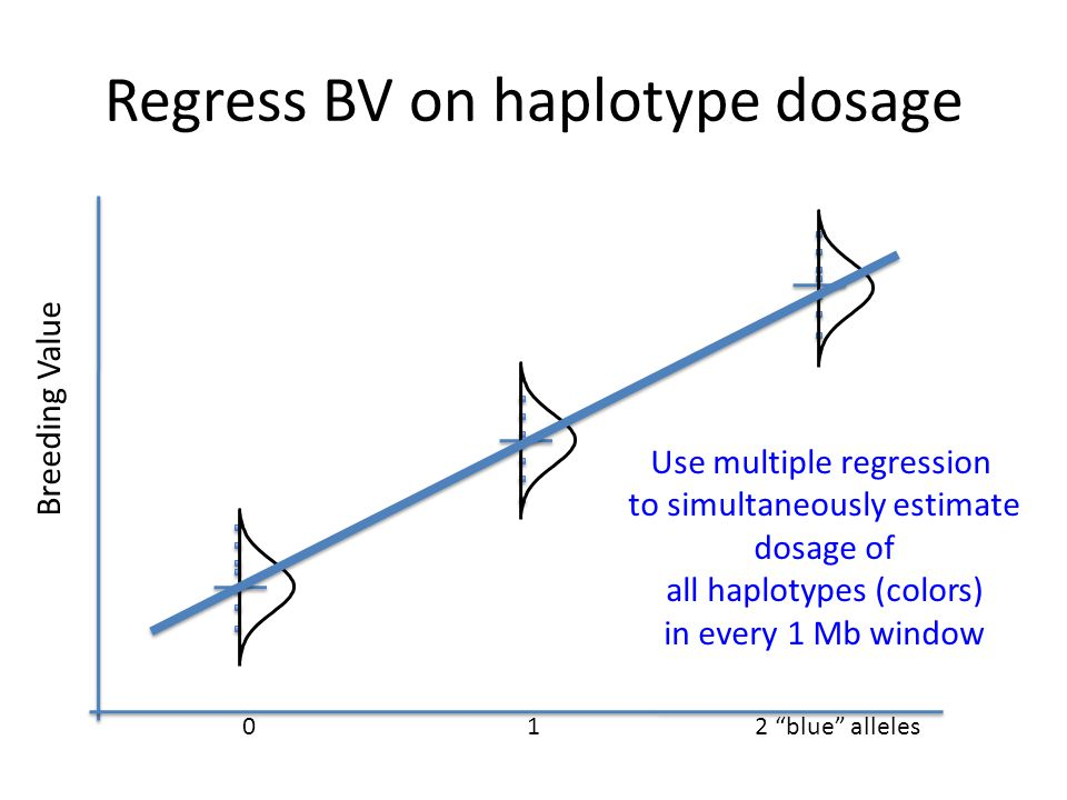 "Regress BV on haplotype dosage 012 ""blue"" alleles Breeding Value Use multiple regression to simultaneously estimate dosage of all haplotypes (colors)"