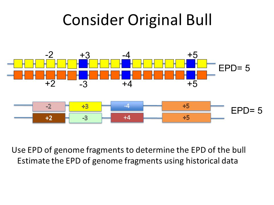 Consider Original Bull +3 -3 -4 +4 +5 -2 +2 EPD= 5 -4 +4 EPD= 5 Use EPD of genome fragments to determine the EPD of the bull Estimate the EPD of genom