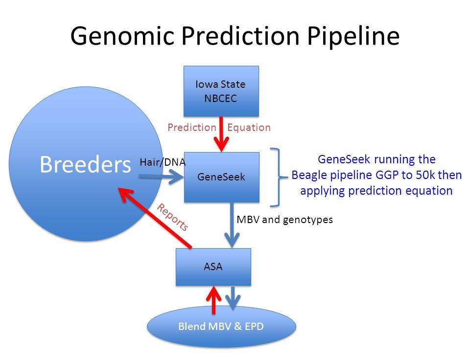 Genomic Prediction Pipeline GeneSeek Iowa State NBCEC Iowa State NBCEC ASA Prediction Equation Breeders Hair/DNA MBV and genotypes Blend MBV & EPD Reports GeneSeek running the Beagle pipeline GGP to 50k then applying prediction equation