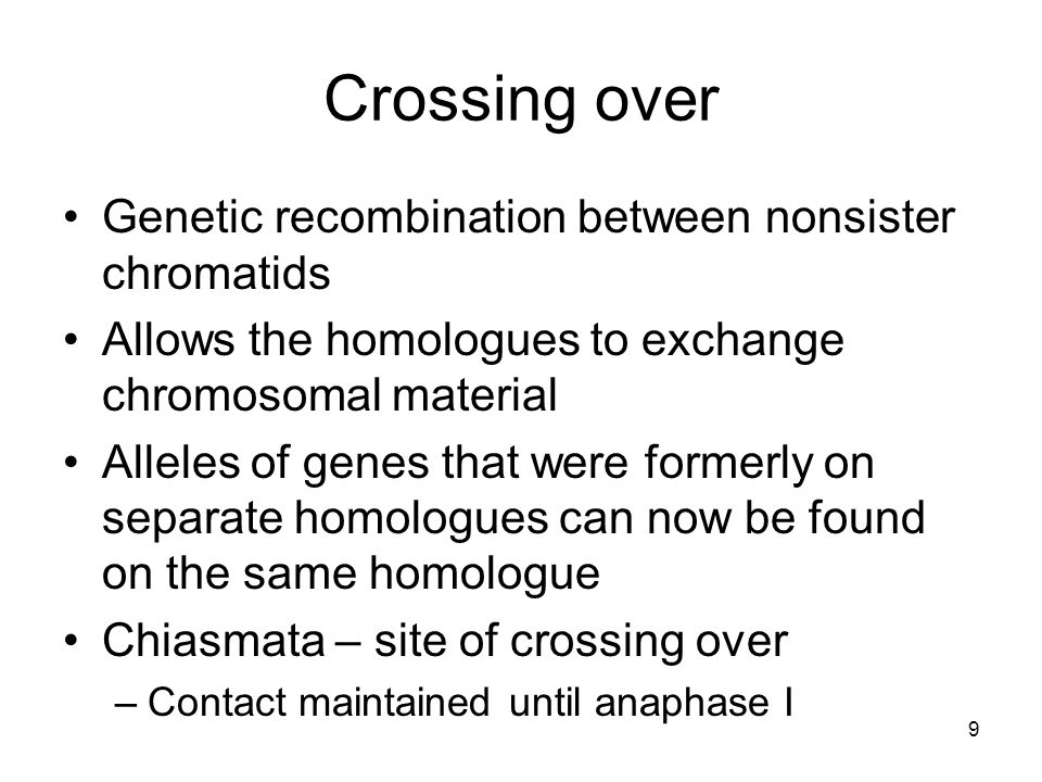 9 Crossing over Genetic recombination between nonsister chromatids Allows the homologues to exchange chromosomal material Alleles of genes that were f