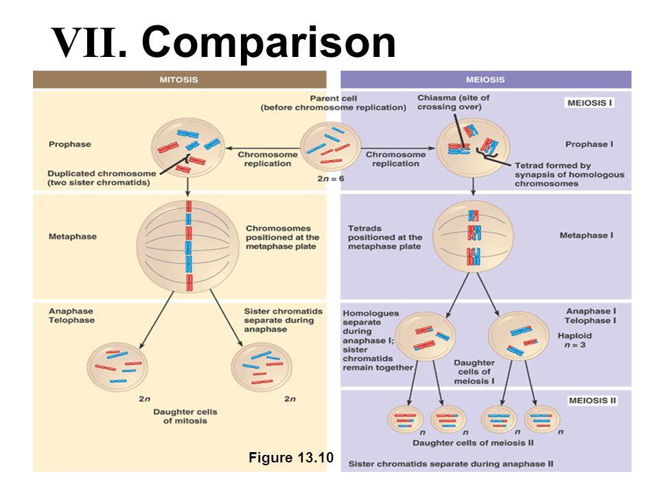 Figure 13.10 VII. Comparison