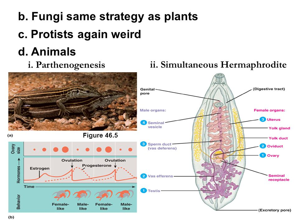 b. Fungi same strategy as plants c. Protists again weird d.