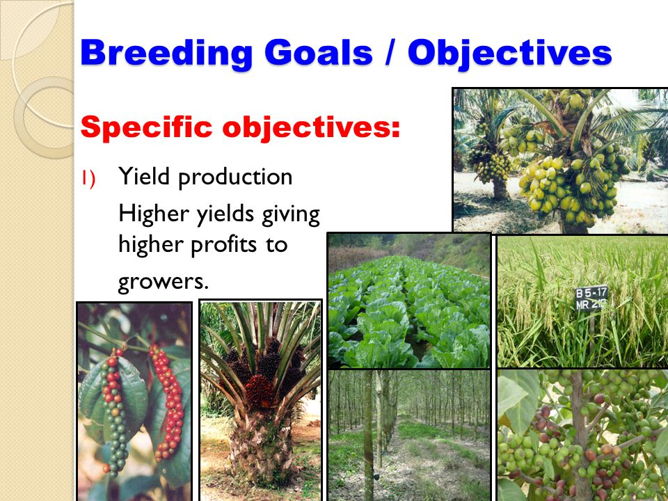 Specific objectives: Breeding Goals / Objectives 1) Yield production Higher yields giving higher profits to growers.