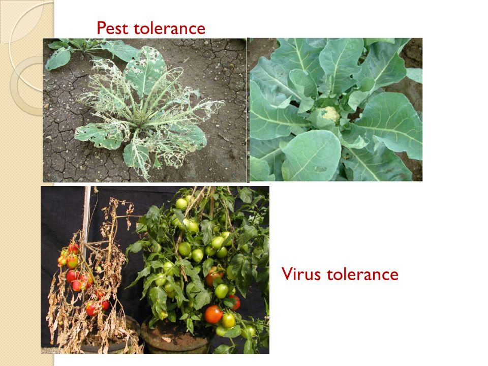 Pest tolerance Virus tolerance
