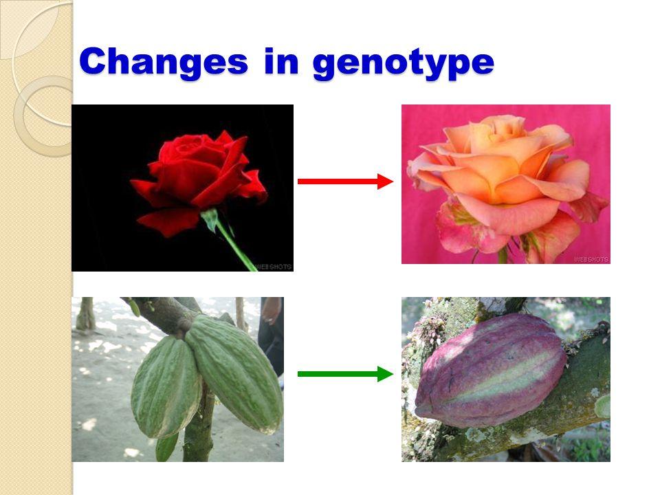 Changes in genotype