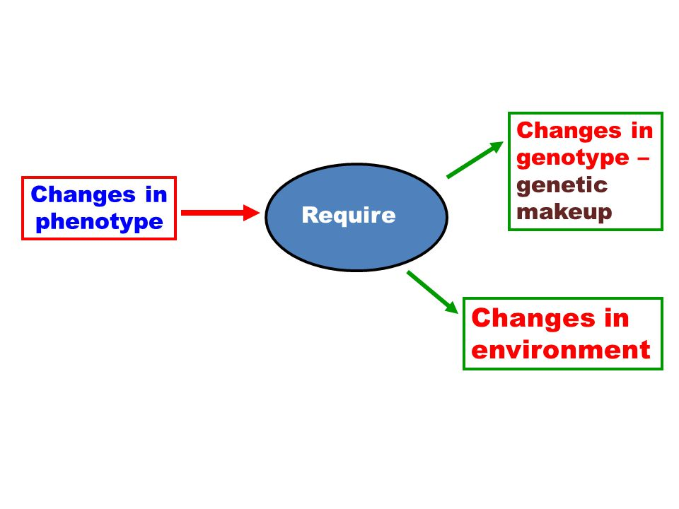 Changes in phenotype Require Changes in genotype – genetic makeup Changes in environment