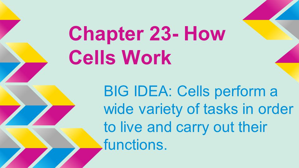 Chapter 23- How Cells Work BIG IDEA: Cells perform a wide variety of tasks in order to live and carry out their functions.