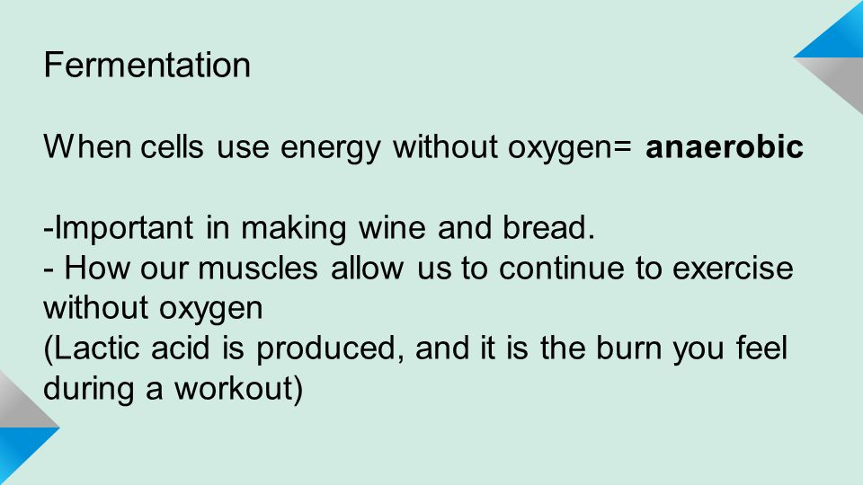 Fermentation When cells use energy without oxygen= anaerobic -Important in making wine and bread.