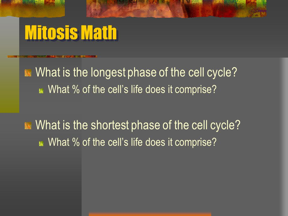 Mitosis Math What is the longest phase of the cell cycle? What % of the cell's life does it comprise? What is the shortest phase of the cell cycle? Wh