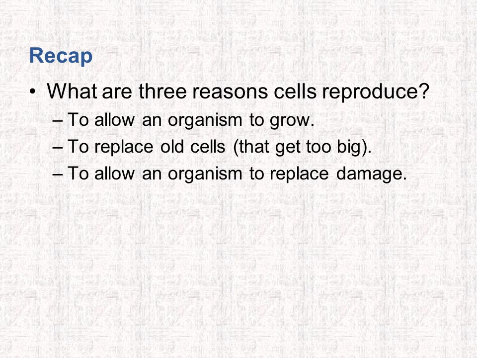 Recap What are three reasons cells reproduce. –To allow an organism to grow.