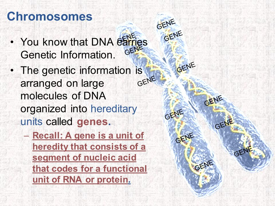 You know that DNA carries Genetic Information.