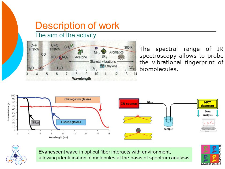 Description of work The aim of the activity The spectral range of IR spectroscopy allows to probe the vibrational fingerprint of biomolecules.