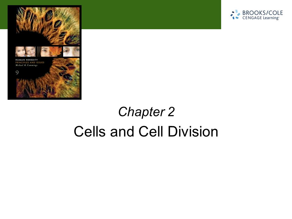 Michael R. Cummings David Reisman University of South Carolina Cells and Cell Division Chapter 2