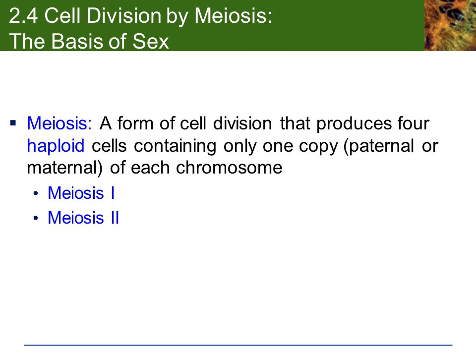 2.4 Cell Division by Meiosis: The Basis of Sex  Meiosis: A form of cell division that produces four haploid cells containing only one copy (paternal or maternal) of each chromosome Meiosis I Meiosis II