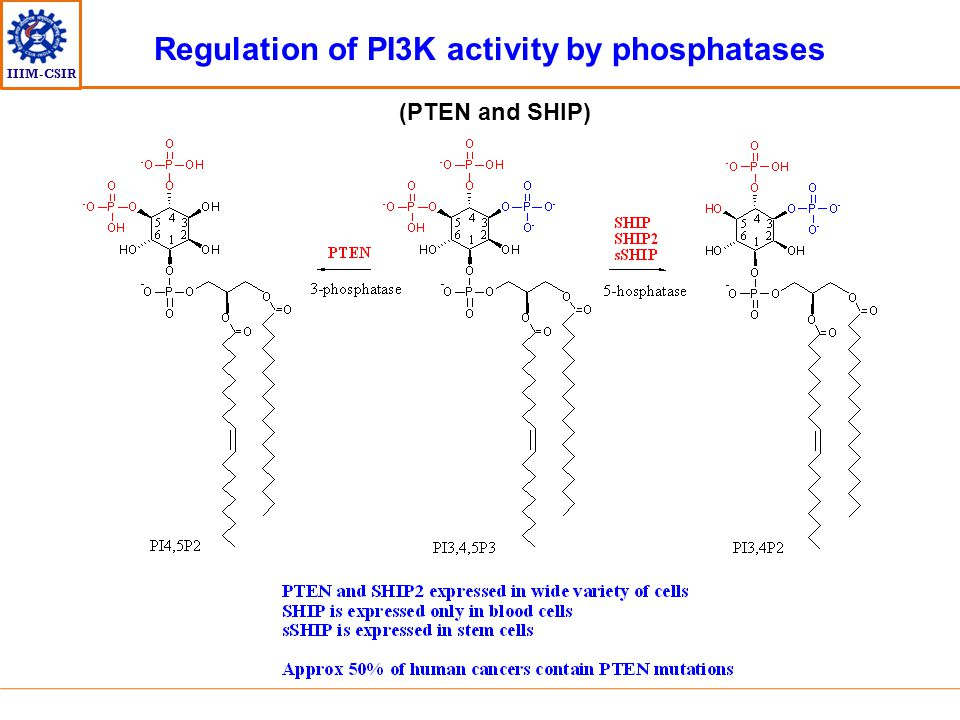 IIIM-CSIR Regulation of PI3K activity by phosphatases (PTEN and SHIP)