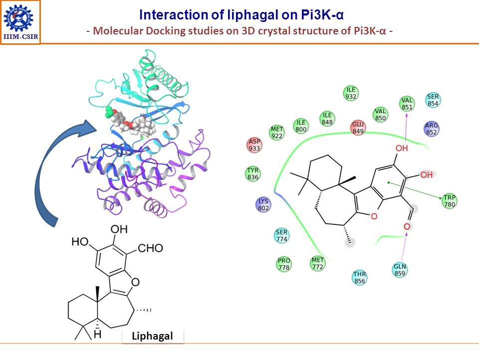 IIIM-CSIR Interaction of liphagal on Pi3K-α - Molecular Docking studies on 3D crystal structure of Pi3K-α - Liphagal