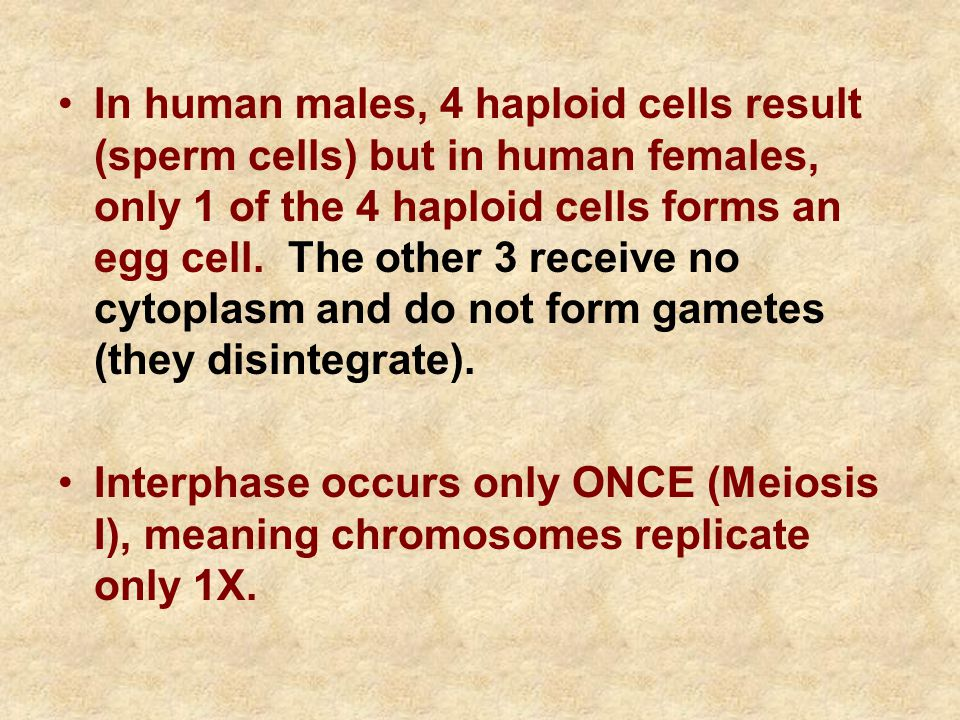 In human males, 4 haploid cells result (sperm cells) but in human females, only 1 of the 4 haploid cells forms an egg cell.