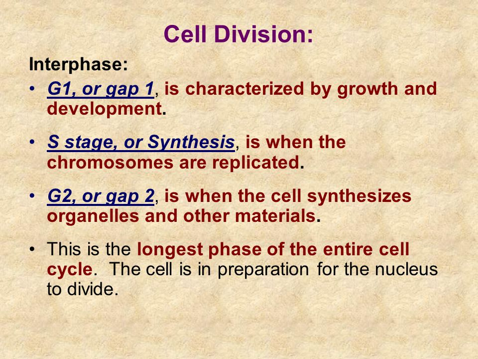 Interphase: G1, or gap 1, is characterized by growth and development.