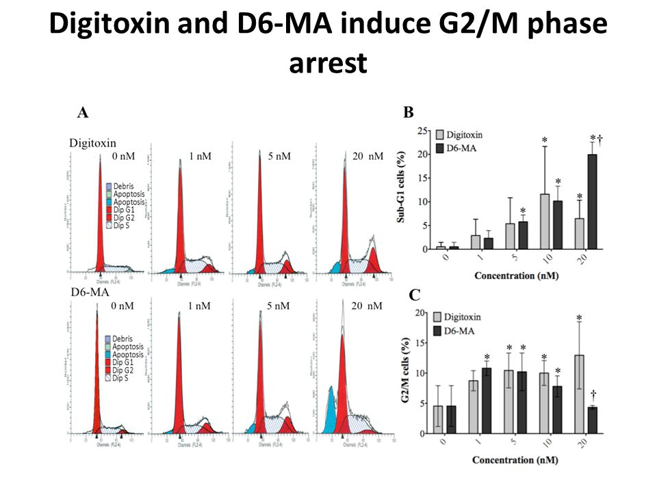 Digitoxin and D6-MA induce G2/M phase arrest