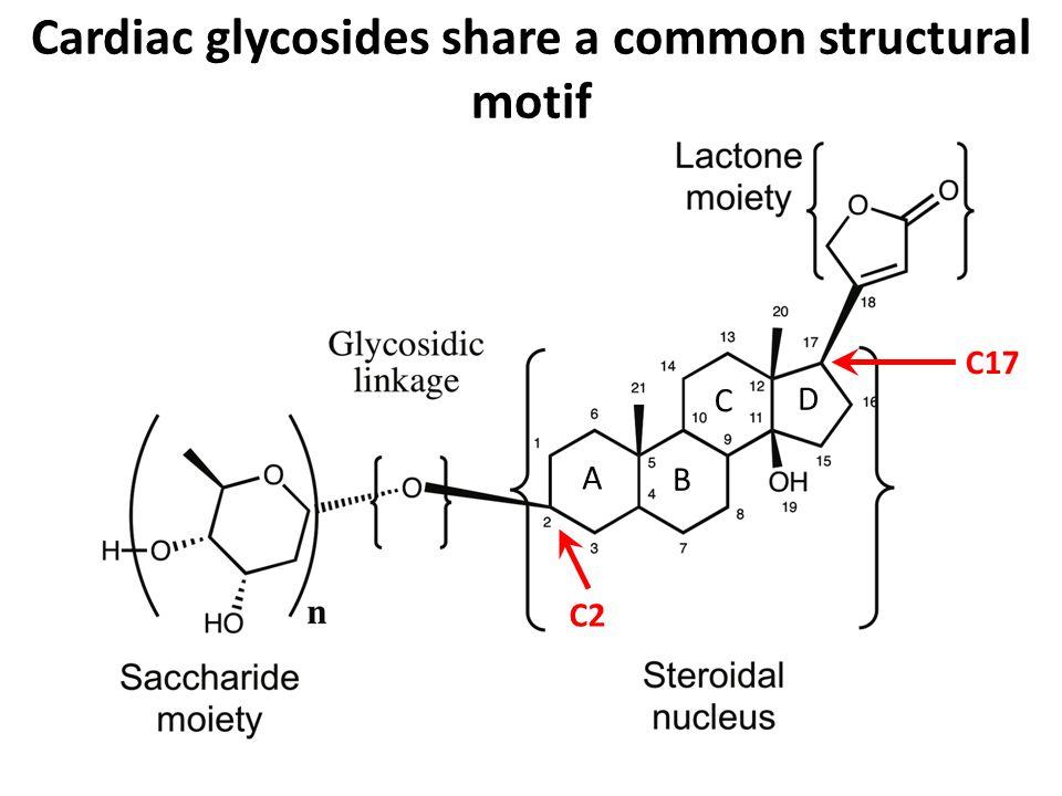 A B C D Cardiac glycosides share a common structural motif C2 C17