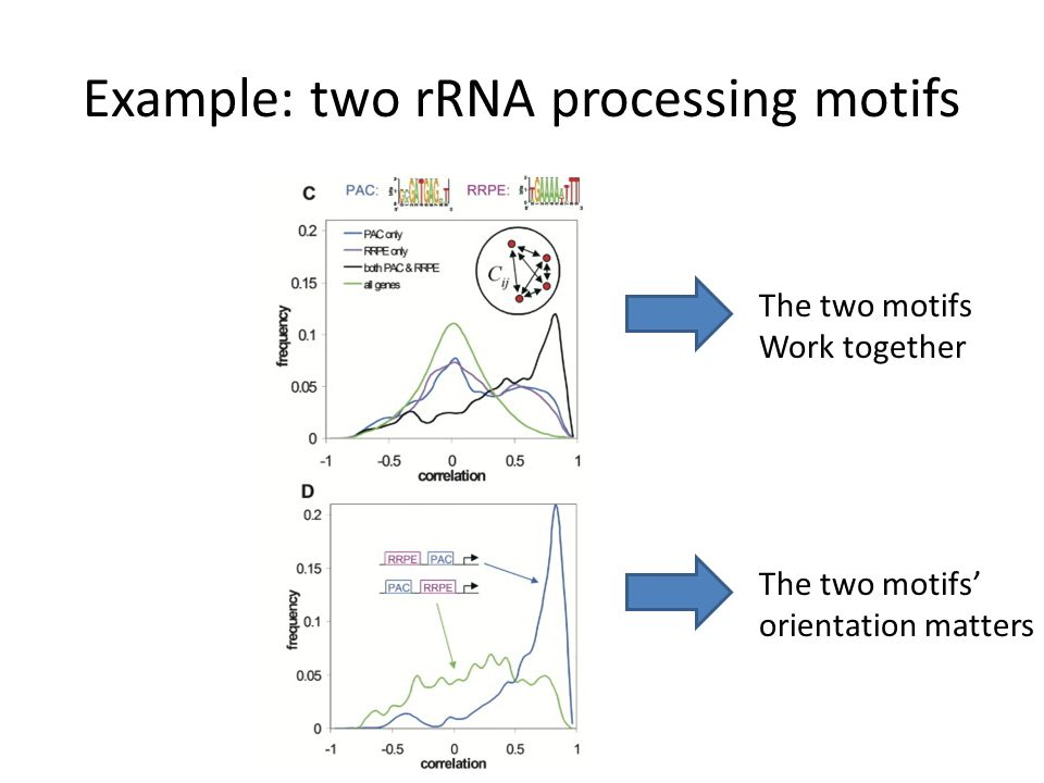 Example: two rRNA processing motifs The two motifs Work together The two motifs' orientation matters