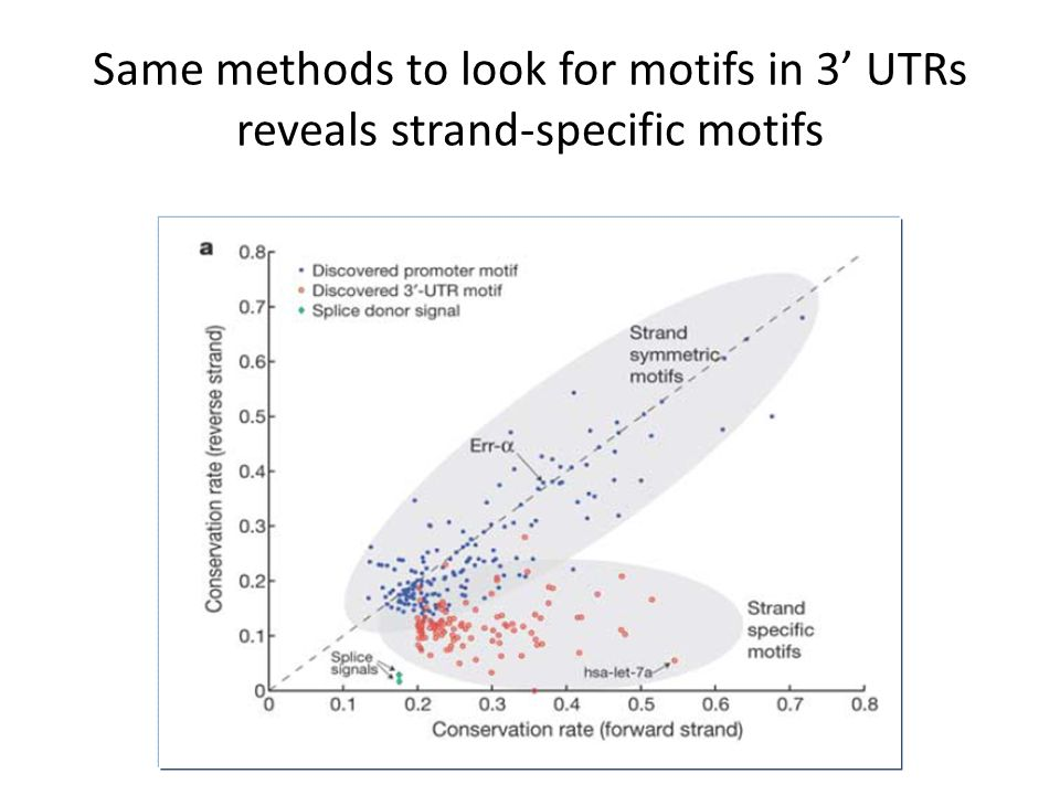 Same methods to look for motifs in 3' UTRs reveals strand-specific motifs