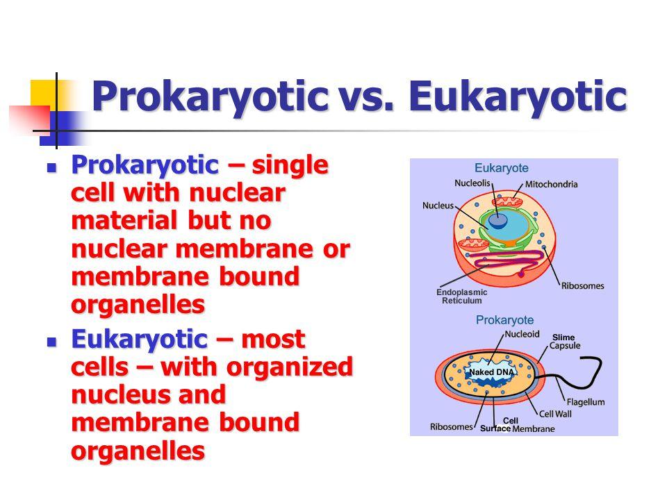 Prokaryotic vs. Eukaryotic Prokaryotic – single cell with nuclear material but no nuclear membrane or membrane bound organelles Prokaryotic – single c