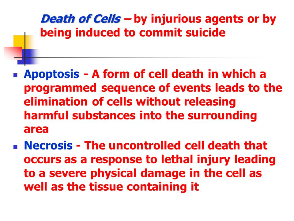 Apoptosis - A form of cell death in which a programmed sequence of events leads to the elimination of cells without releasing harmful substances into