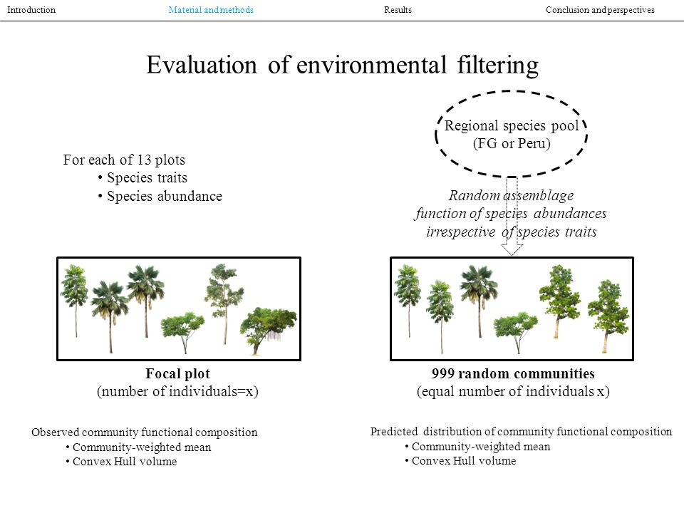 Evaluation of environmental filtering Regional species pool (FG or Peru) 999 random communities (equal number of individuals x) Random assemblage function of species abundances irrespective of species traits Focal plot (number of individuals=x) Observed community functional composition Community-weighted mean Convex Hull volume Predicted distribution of community functional composition Community-weighted mean Convex Hull volume Introduction Material and methodsResultsConclusion and perspectives For each of 13 plots Species traits Species abundance