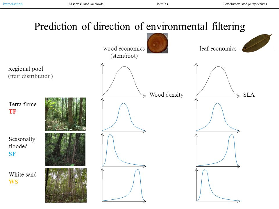 Regional pool (trait distribution) Terra firme TF Seasonally flooded SF White sand WS wood economics (stem/root) leaf economics Wood densitySLA Prediction of direction of environmental filtering Introduction Material and methodsResultsConclusion and perspectives