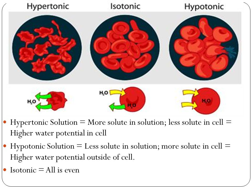 Hypertonic Solution = More solute in solution; less solute in cell = Higher water potential in cell Hypotonic Solution = Less solute in solution; more solute in cell = Higher water potential outside of cell.