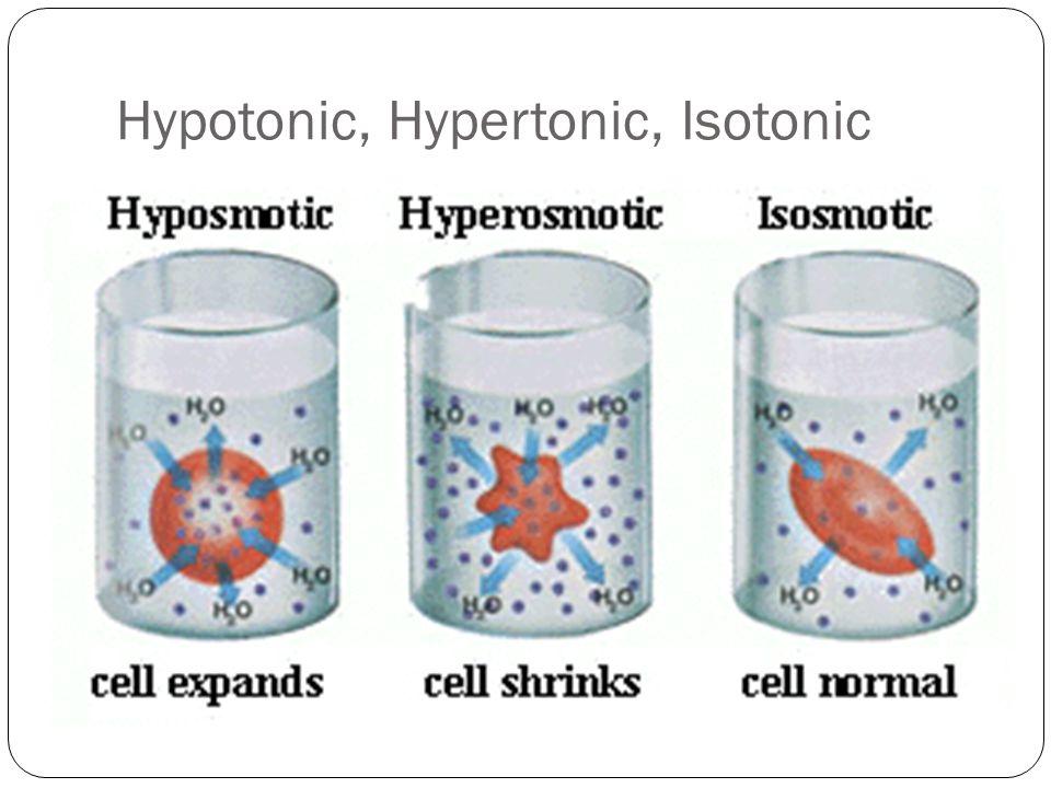 Hypotonic, Hypertonic, Isotonic