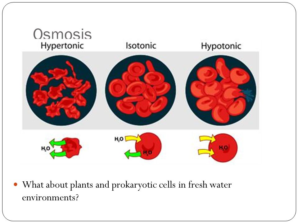 Osmosis What about plants and prokaryotic cells in fresh water environments