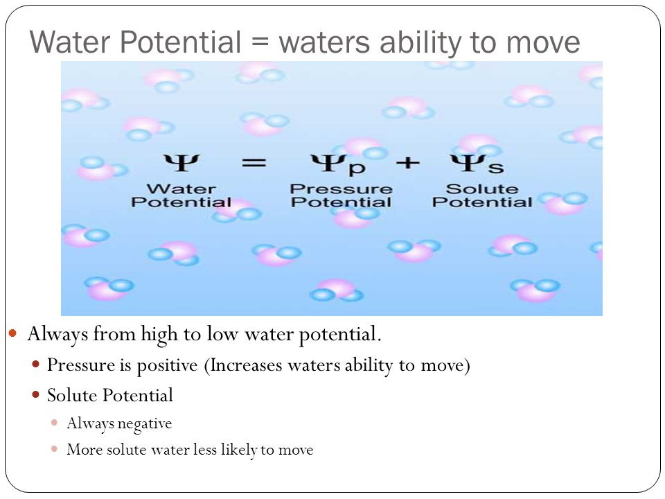 Water Potential = waters ability to move Always from high to low water potential.