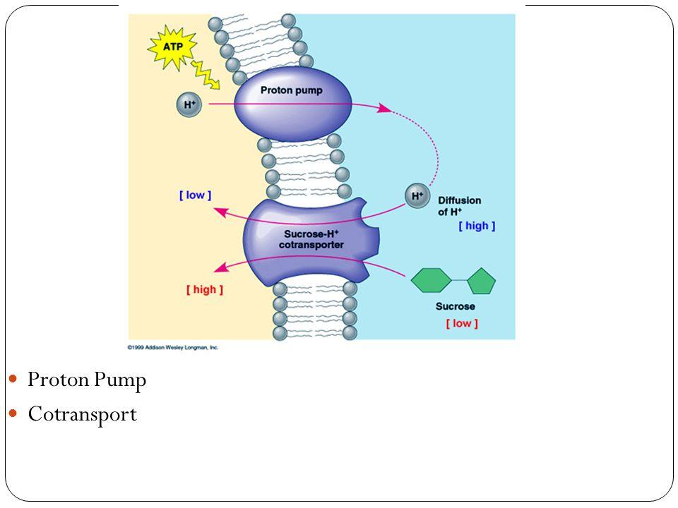 Proton Pump Cotransport