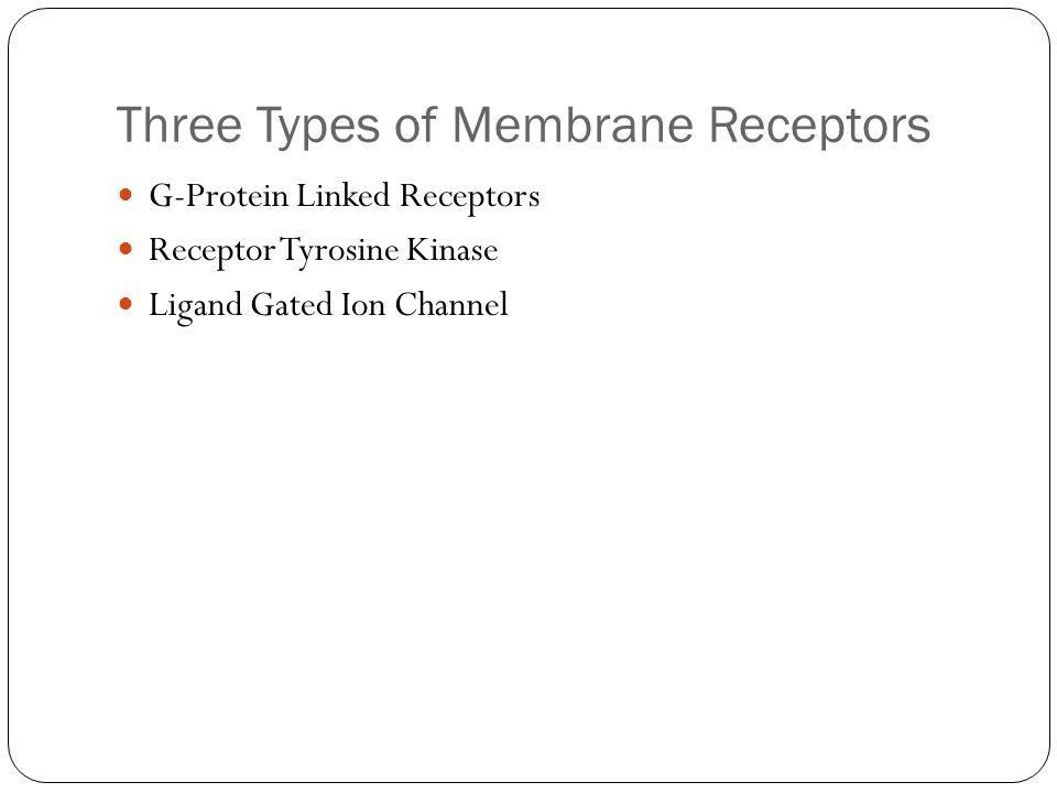 Three Types of Membrane Receptors G-Protein Linked Receptors Receptor Tyrosine Kinase Ligand Gated Ion Channel