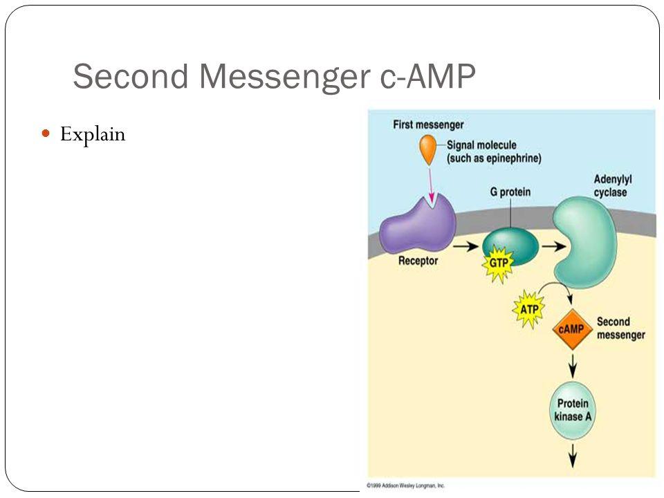 Second Messenger c-AMP Explain