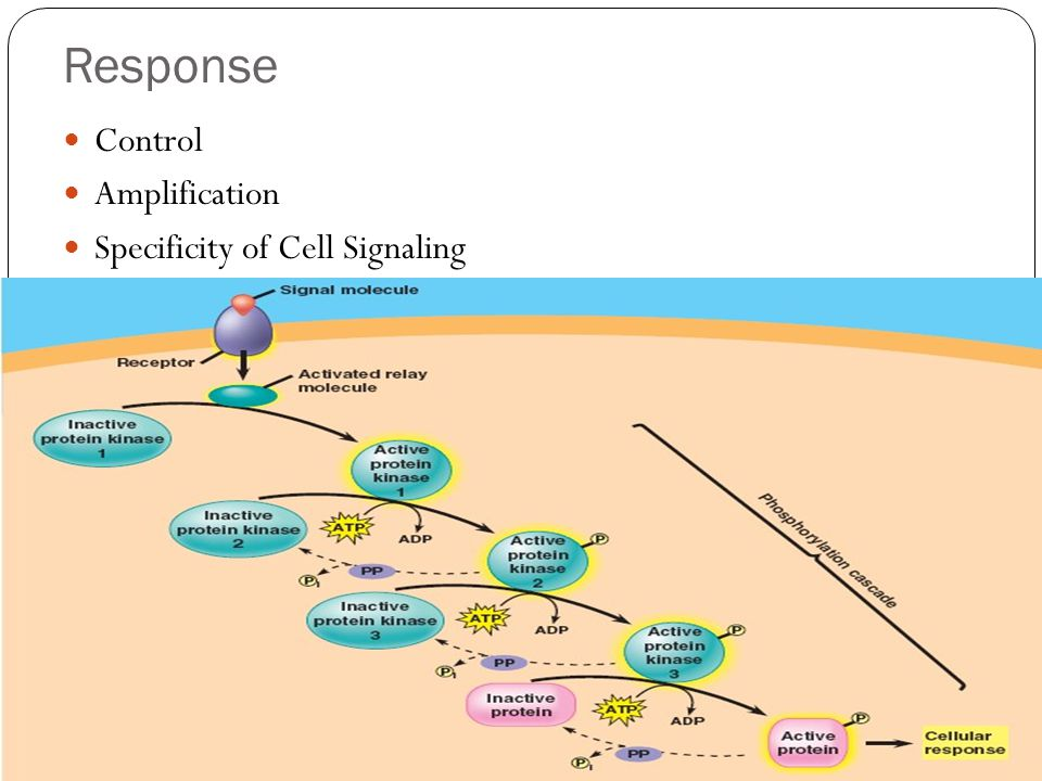 Response Control Amplification Specificity of Cell Signaling